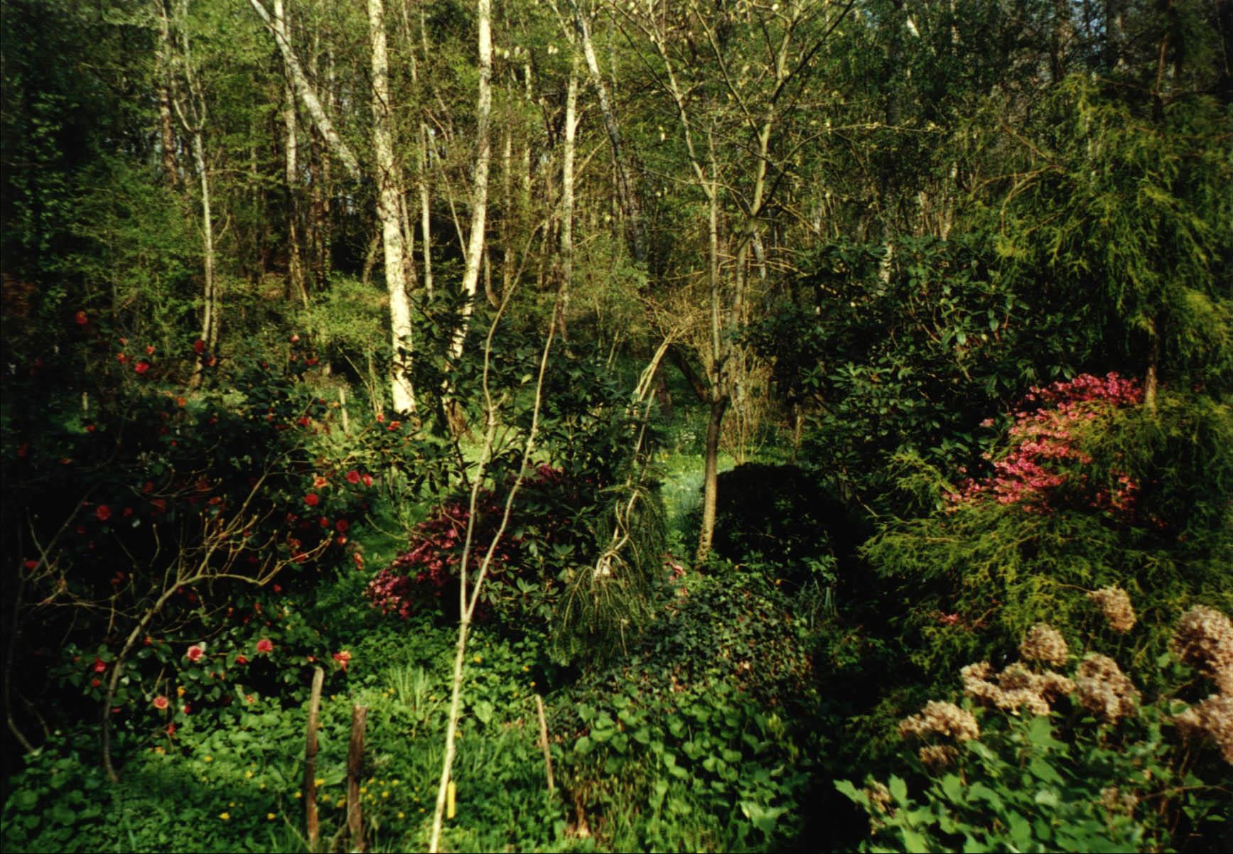 Le sous bois avec arbres et plantes vari es - Sous bassement en bois ...